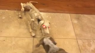 Dog barking at dog halloween prop