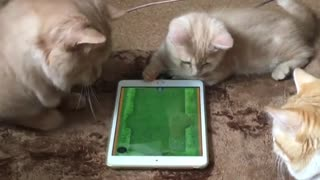 Cats and tablet  - Video
