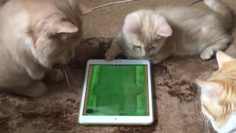 Cats and tablet