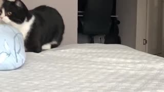 Super adorable slow-mo cats run
