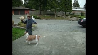 Determined Pitbull Plays NBA-Level Defense Against Teen Boy