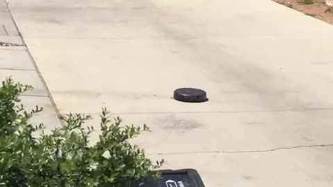 Robot vacuum fed up with quarantine makes a run for it