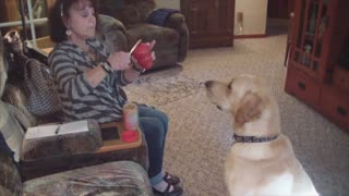Obedient Dog Fetches Himself A Peanut Butter Snack From Kitchen Cabinet