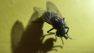 Fly Continues to Live with Head Missing