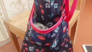 playful little mouse with an apron.