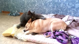 I see it a dog and a cat very well!  - Video