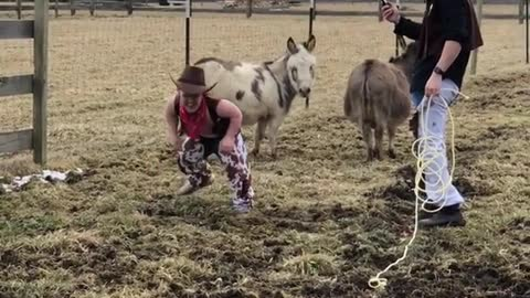Dwarf man dressed in cowboy costume rides a donkey and falls off backwards