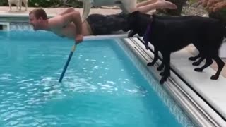 Funny Dog's Reaction When They See A Water - Video
