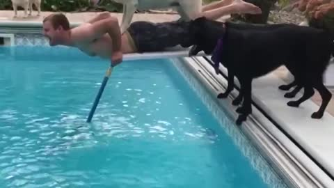 Funny Dog's Reaction When They See A Water