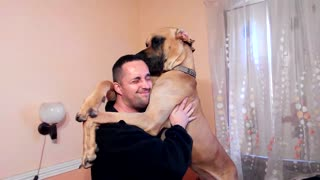It's not easy to hug a Great Dane!