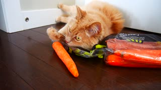 Weirdo cat has strange obsession with carrots - Video