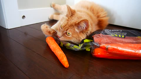 Weirdo cat has strange obsession with carrots