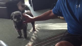 Dog attacks his Grandpa with kisses