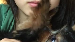 Asian girl selfie cam yorkie touching face - Video