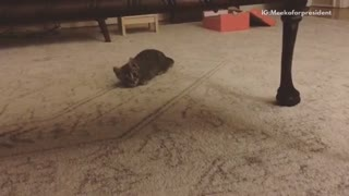 Kitten pushes along ground and jumps at camera - Video