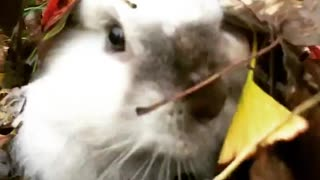 Surprise! Look what appears from a pile of leaves!  - Video