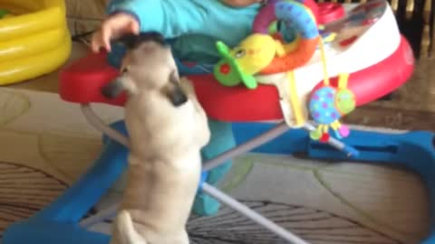 Baby boy captivated by pug puppy