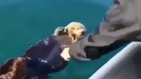 Ferret animal in sea next to boat