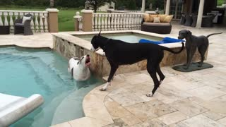 Katie and Max enjoy playing in the pool