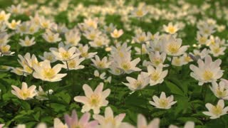 How birth the flower - Video