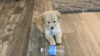"Puppy is totally confused when ""confronted"" by plastic bottle"