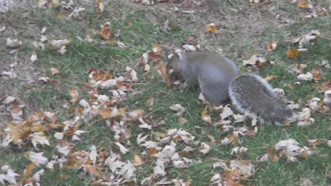 How Squirrels Get Ready for Winter