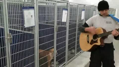 Animal Shelter Adds Live Music To Their Enrichment Program