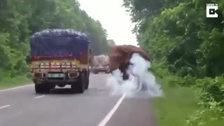 Elephant Stops And Eats Potatoes From Truck On Road - Video