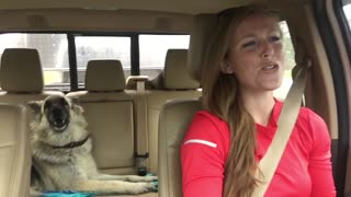 As Mom Drives Down The Road, Shiloh Shepherd Dog Howls To Queen's