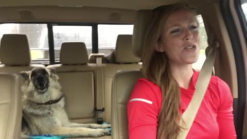 As Mom Drives Down The Road, Shiloh Shepherd Dog Howls To Queen's 'We Are The Champions'