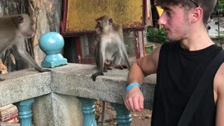 Monkey Trouble in Thailand