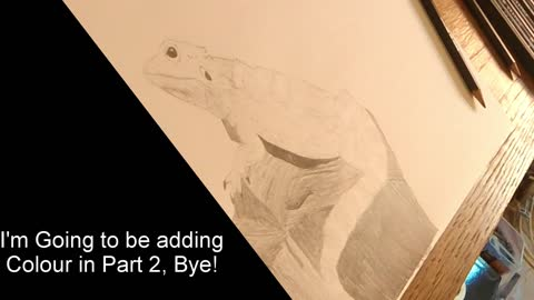 "Bearded Dragon Drawing Tutorial ""Using Pencils"" Age 10yrs"