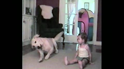 Toddler Mimics Dog Tricks With Labrador