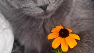 Beautiful video with the look of a cat.