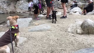 Brown and black dog smelling one another near river  - Video