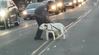 Stubborn dog refuses to cross busy street