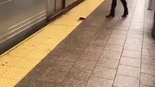 Rat walking in subway platform woman scared