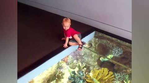 Curious Toddlers Find The Glass Floor Very Interesting