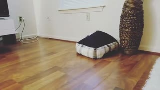 Collab copyright protection - puppy stuck under dog bed - Video