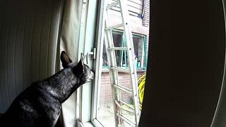 Dog unlocks window, sneaks out of house - Video