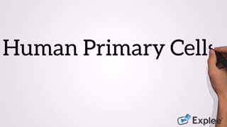 Human Primary Cells - Video