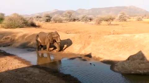 Graceful Elephant showing off during his bath time