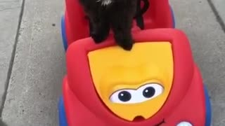Black dog riding cart along sidewalk - Video