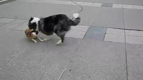 Two Dogs playing friendly with each other