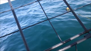 Shark Cage Dive Experience - Video