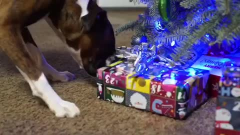 Puppy surprises Puppy with a Puppy