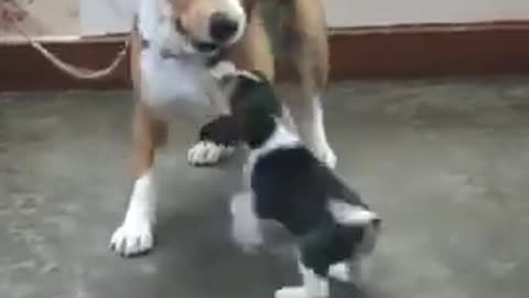 funny dog funny dog and cat videos funny comedy video