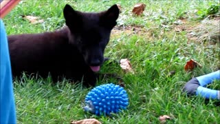 Police Puppy for present - Video