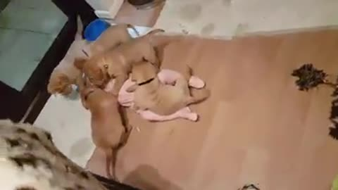 Giggly Tot Disappears Under A Stampede Of Tiny Pups