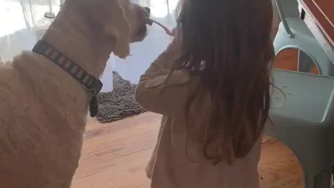This little girl brushes her dog's teeth with stinky baby food